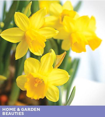 home garden beauties